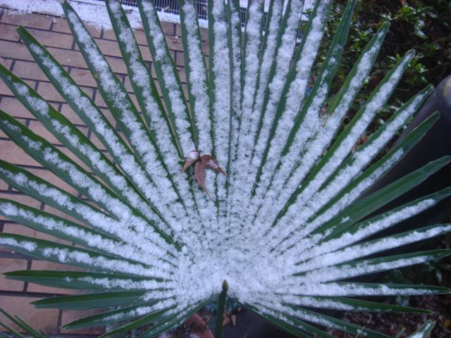 雪のトウジュロ05013.JPG
