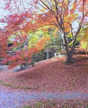 20041129赤の絨毯3_0000.jpg