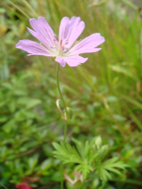 20080713_ibukihuuro_04933.JPG