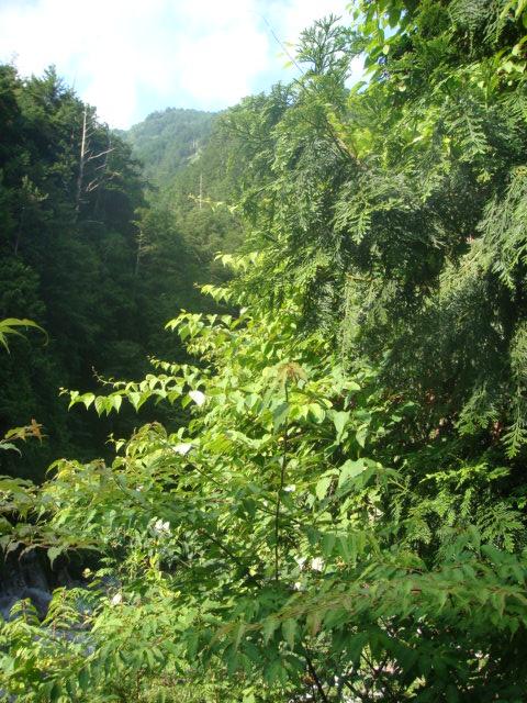 20080719_matatabi_06212.JPG