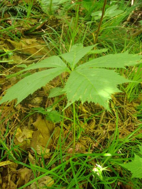20080719_yagurumasou_05823.JPG