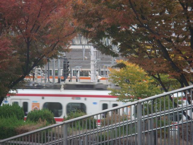 20081110_jinguu_09708.JPG