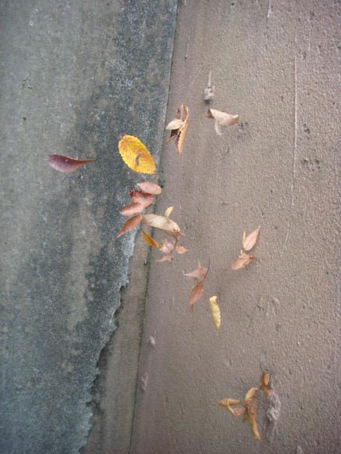 20081118_kumonoito_09993.JPG