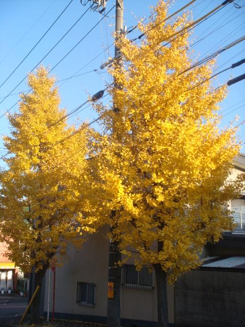 20081202_ichou_00071.JPG