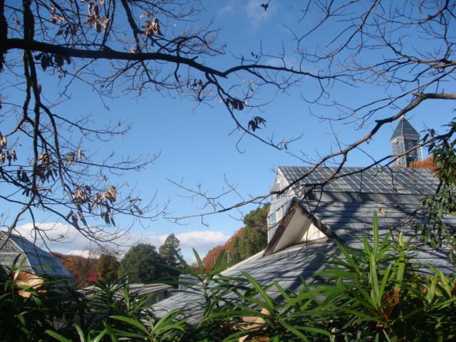20081206_higasiyama_00231.JPG