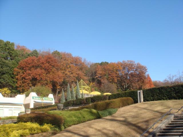 20081206_higasiyama_00613.JPG
