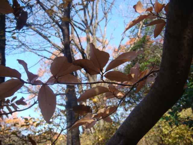 20081206_yamakoubasi_00248.JPG