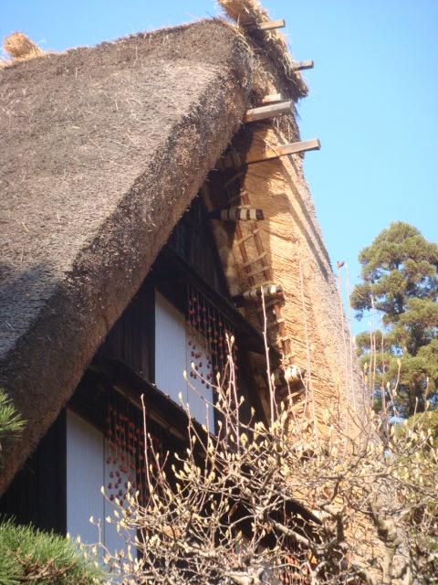 20081214_hosigaki_00961.JPG