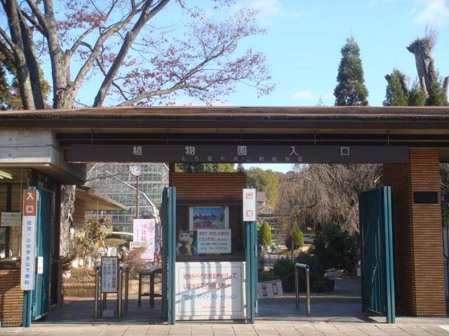 20081214_shokubutuen_00855.JPG